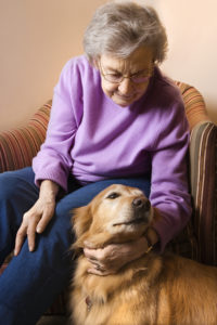 Senior Care in Hamilton NJ: What Should Your Parent Do Immediately After Taking in a Pet?